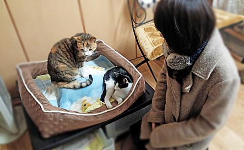 猫のやすらぎと人のやすらぎ