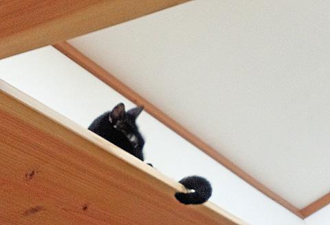 天井のキャットウォークでくつろぐ猫