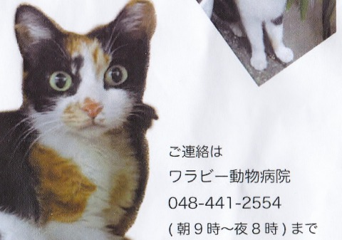 0s_みけこ%20(2)