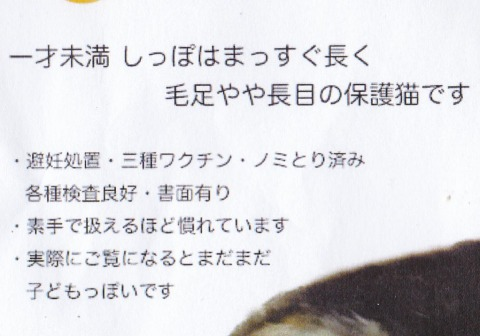 0s_みけこ%20(5)